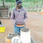 Mwenezi in bumper Mopane worms harvest