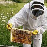 Mutasa beekeepers reap large