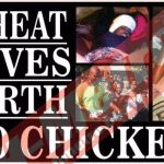 Cheat gives birth to chicken