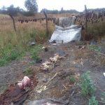 Dog meat vendor records brisk business in Bulawayo