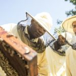 African Migrants Find Work as Beekeepers in Italy