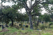 Many Zimbabweans choose funeral insurance over medical insurance, to guarantee that they'll be able to afford gravestones, funeral services and other details that are expected here. Pictured is a cemetery in Mutare, Zimbabwe. Credit: Evidence Chenjerai/GPJ Zimbabwe