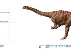 Dinosaur Fossils Found in Zimbabwe