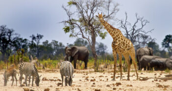 Animal sanctuary ... Hwange National Park is Zimbabwe's biggest wildlife reserve