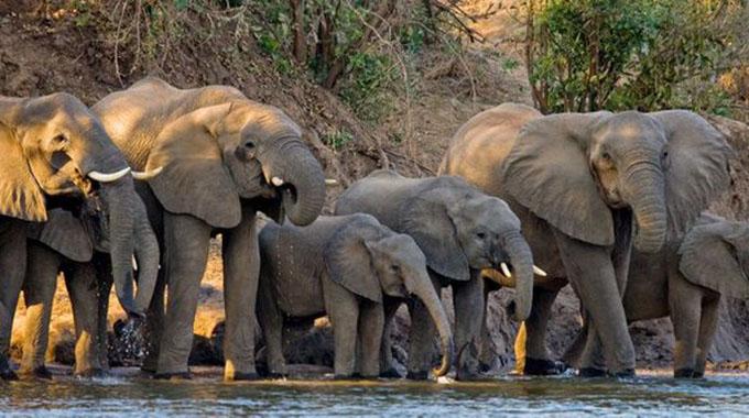 2904-1-1-ELEPHANTS