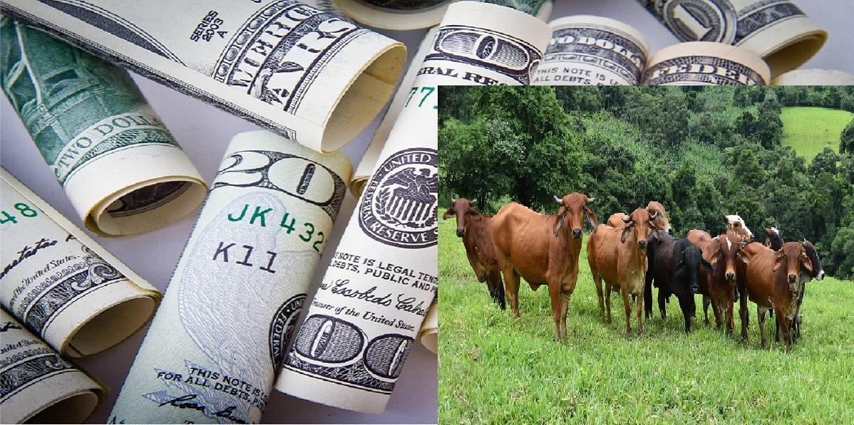Lobola-money-cattle-ruling
